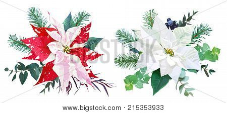 Christmas bouquets arranged from red and white poinsettia, fir branch, agonis, eucalyptus selection, mix of plants and berries. Happy holiday greenery. Watercolor style set. All elements are isolated.
