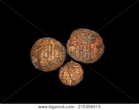Group of Konjac Corm or Elephant yam Isolated on Black Background Clipping Path