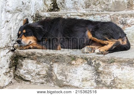 Black stray dog sleeping on the stairs in Bhutan Asia