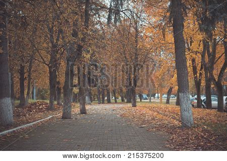 Path Among Young Trees In Autumn