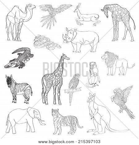 Vector illustration. Set of animals parrot giraffe monkey gazelle elephant rhinoceros kangaroo camel lion zebra crocodile snake tiger Black line