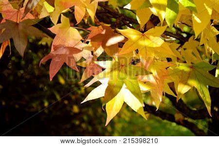 Season change with colorful leaf and full frame