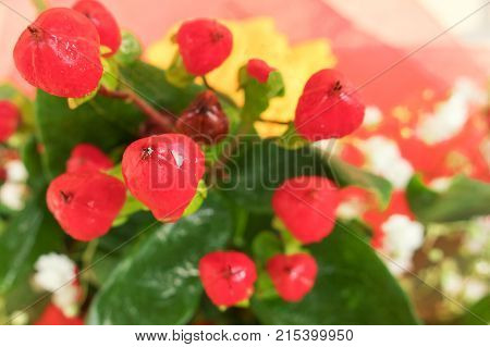 beautiful red small flowers and small white flowers