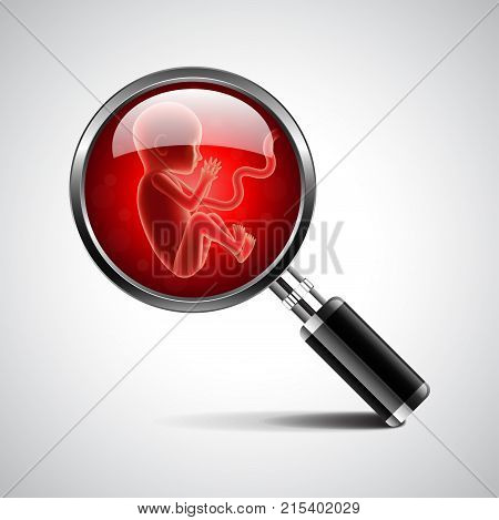 fetus in magnifying glass of magnifier isolated photo-realistic vector illustration