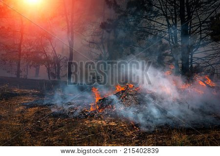 forest fire. firefighters to extinguish the fire. wildfire