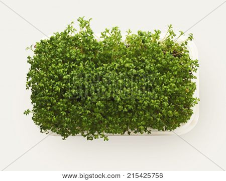 Growing micro greens isolated on white background. Healthy eating, fresh organic produce and restaurant decoration concept. Top view on watercress in plastic bowl, copy space