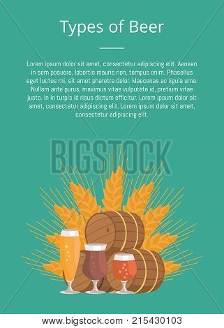 Types of beer degustation vector illustration on green. Wheat, wooden barrels and three glasses draught pale and dark beers on background of wheat. poster