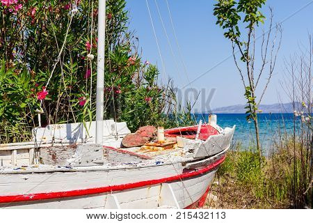 Overgrown in weed old wooden sailboat is dry docked withdrawn to the beach.