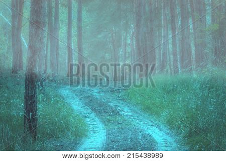 trail rises in the evening mysterious forest covered with fog tainted atmosphere fantastic natural background