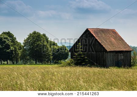 Big fields of high and green grain and trees and an old shack in the background