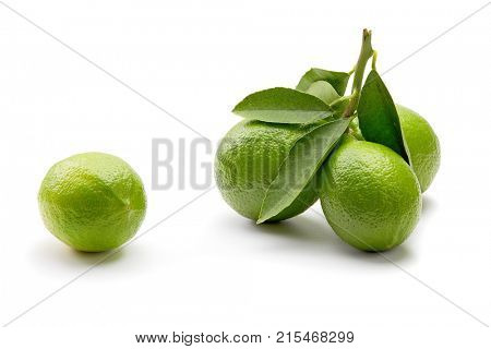 Fresh green lemons with leaves on white background. Lemons on twig with leaves.