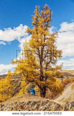 Photographer taking picture in mountains under yellow larch