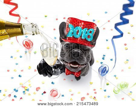 Happy New Year Dog Celebration