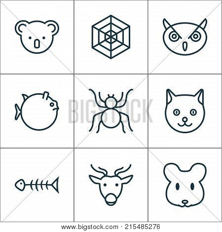 Nature icons set with rat, seafood skeleton, spider and other marsupial elements. Isolated vector illustration nature icons.