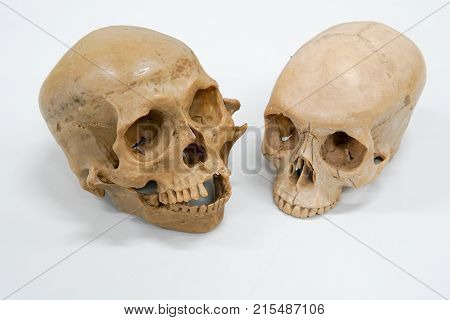 Human skull for eduction on the white background