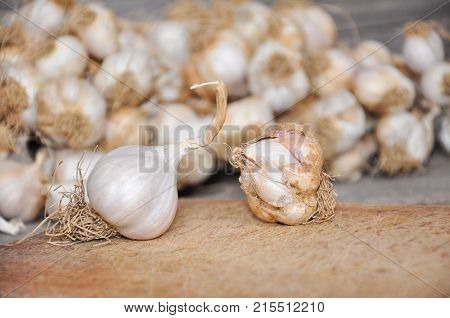 Organic and non-organic garlic on the rustic cutting board. Difference between organic and non-organic vegetables