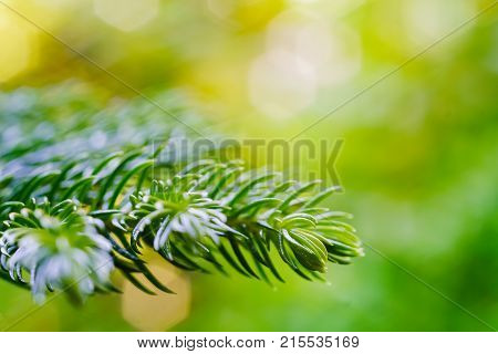 Nature Green Background Shallow Dof With Copy Space, Fern New Leaf Growing, Macro Of A Fern Frond Un
