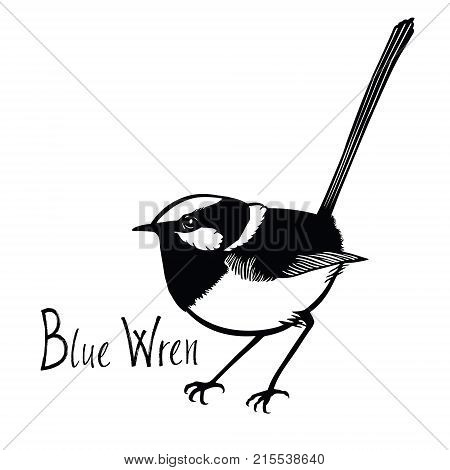 Birds collection Blue Wren Black and white vector Isolated object
