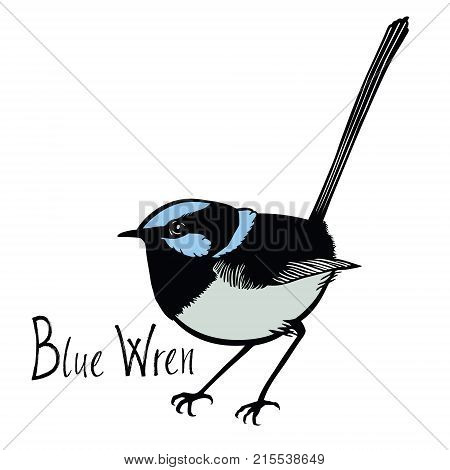 Birds collection Blue Wren Color vector Isolated object
