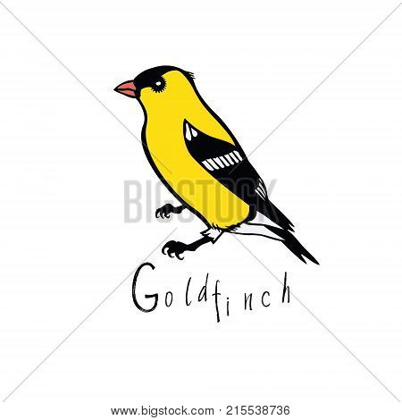Birds collection set Goldfinch Color vector object