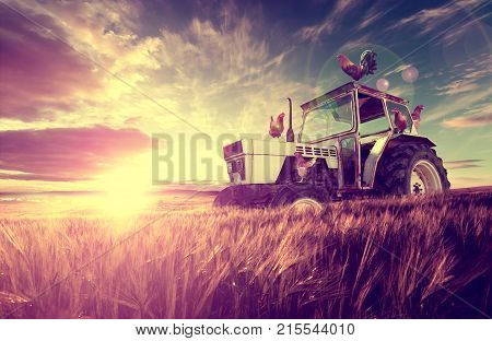 Tractor and agriculture scenery. Hen and rooster. Farm scenery and sunset wheat fields