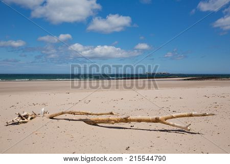 Northumberland beach and coast at Bamburgh north east England UK with view to the Farne islands and driftwood