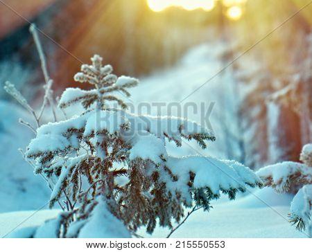 Winter christmas frozen landscape  frozen taiga forest