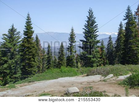 scenery at the Sequoia and Kings Canyon National Park with fir trees in California USA