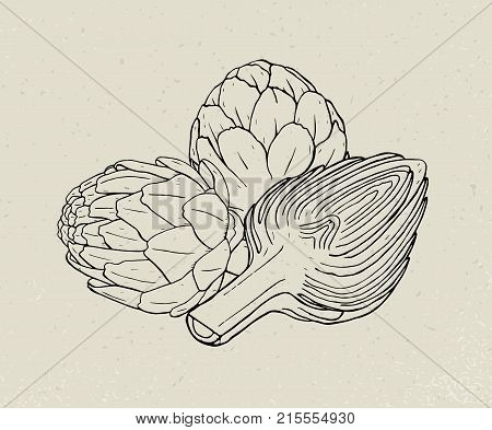 Full and cut budding artichoke flower heads or inflorescences hand drawn with black contour lines. Edible plant, delicious cultivated vegetable. Monochrome vector illustration in vintage style
