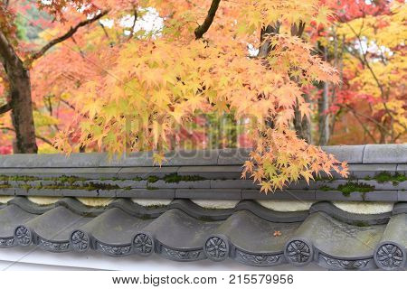 Autumn Leaves in the Japanese Zen Temple