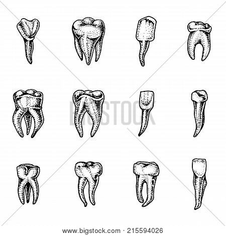 molar teeth enamel, dental set. work of the dentist and care for children. oral cavity clean or dirty. health or caries human. engraved hand drawn in old sketch, vintage style. symbol of medicine