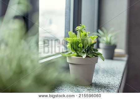 close up view of green plant in flowerpot on windowsill in room