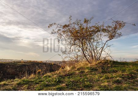 Wild Rose Plant On Hillside At Autumn Sunset