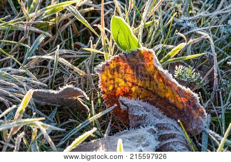 Fallen Foliage On A Green Grass Covered With Frost
