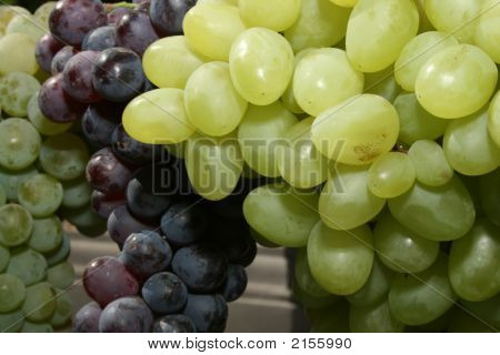 Bunch Of Mature Grapes 1