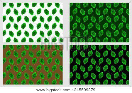 Beech leaf - vector pattern - set , (Fagus sylvatica) poster
