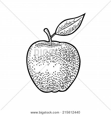 Apple whole with leaf. Vintage black engraving illustration for poster, web. Isolated on white background.