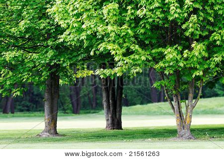 Trees In The Greenery