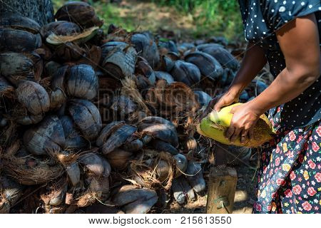 Close up Indian woman uses special device to dehusk coconuts with pile of husk in background