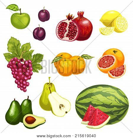 Exotic tropical fruits isolated flat icons. Vector set apple, plum or pear and lemon citrus orange and grapefruit, pomegranate garnet, watermelon or avocado and grape for farm market or fresh juice