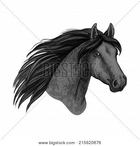Horse or mustang head with wavy mane sketch isolated icon. Vector wild equine animal muzzle or racehorse trotter for sport team mascot or stallion for equestrian contest or horse races and exhibition