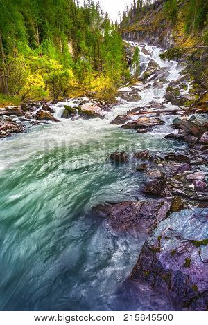 Falls. Water flow falling from the rock. The mountain river in a taiga the coniferous green forest. Altai Russi