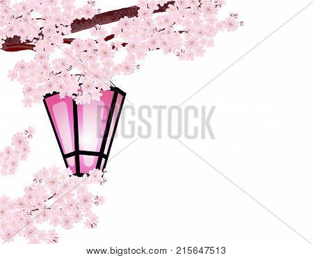Sakura. Magnificent branches of a cherry tree with pink small flowers and cherry buds. A garden lantern. Vector illustrator