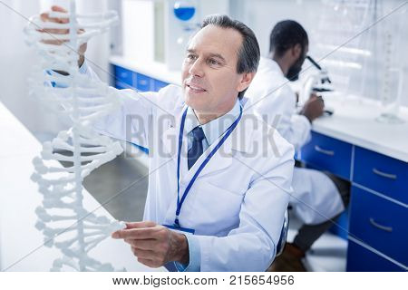 Genome studies. Nice serious male scientist looking at the DNA model and touching it while doing a research