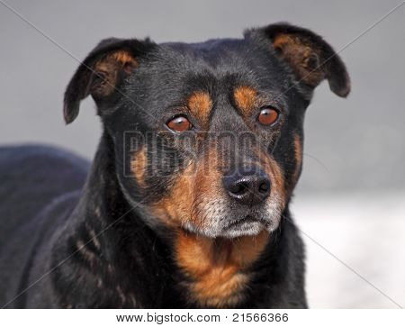 Brown and black color cute dog expression poster