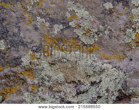 Gray, Green, Black, Lichen on rock, symbiotic combination of a fungus with an algae or bacterium, close up, macro in fall on the Yellow Fork and Rose Canyon Trails in Oquirrh Mountains on the Wasatch Front in Salt Lake County Utah USA.