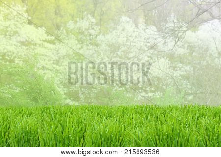 Spring Background. Green Grass Background With Selective Focus