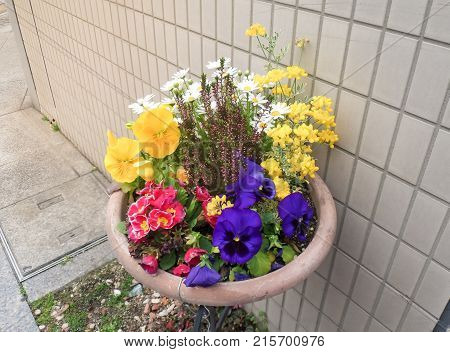 Many varieties of colorful flowers in pot.