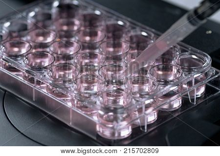 Life science research, close up image, pink
