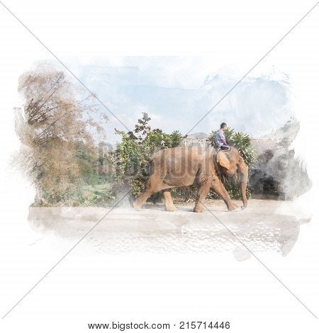 Mahout rides elephant walking on the road. Watercolor painting (retouch).